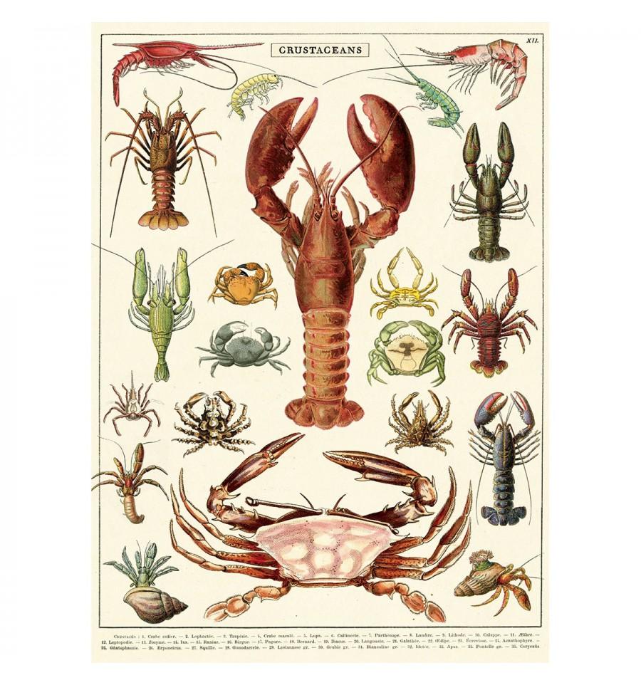 """Résultat de recherche d'images pour """"crustacés"""""""