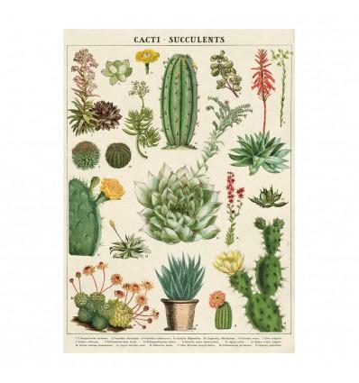 Affiche pédagogique Cactus et succulentes - Cavallini & Co