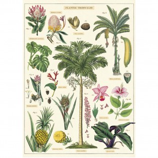 Affiche pédagogique plantes tropicales