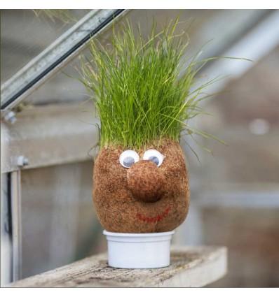 Tête herbe à faire pousser