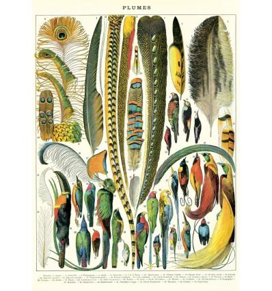 Affiche pédagogique Plumes - Cavallini & Co