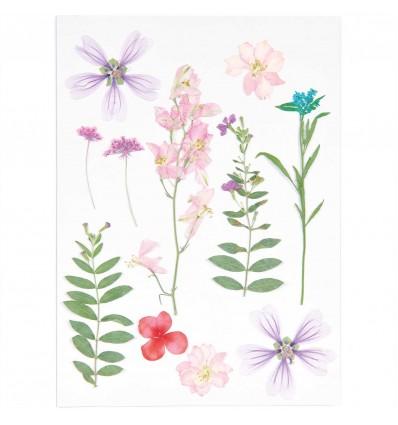 Fleurs pressées Rose Violet - Rico Design